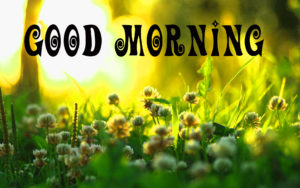 Special gd gud mrng Images pics pictures free hd