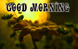 Special gd gud mrng Images photo pictures free hd download for whatsapp