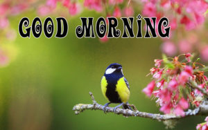 Spring Good Morning Images pictures photo hd download