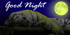 Good Night Images HD Pictures Wallpaper Pics Free HD