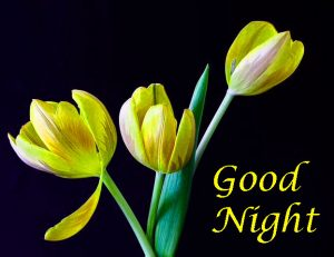 Good Night Images Wallpaper pics With flower