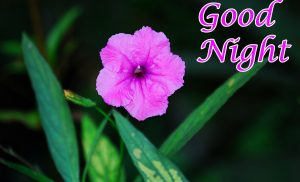 Good Night Images Photo Pics Wallpaper With flower