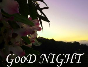 Good Night Images Wallpaper pictures Free