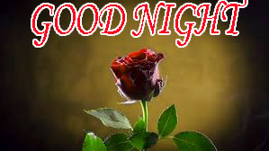 Good Night Images Wallpaper Photo With red rose