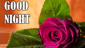 Beautiful Good Night Images Wallpaper Pics Download for Whatsapp