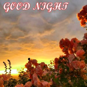 Beautiful Good Night Images Wallpaper With Flower