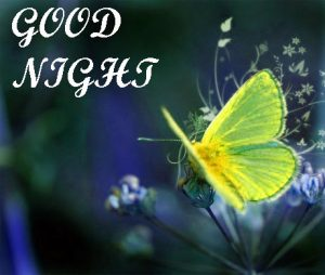 Beautiful Good Night Images Wallpaper for Whatsapp Pics Download