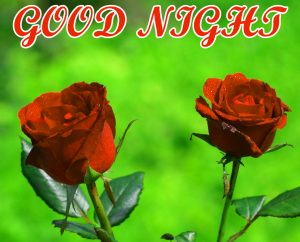 Beautiful Good Night Images  Pics Wallpaper With Red Rose