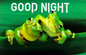 Very funny good night images wallpaper photo hd download