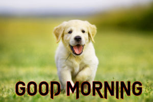 Puppy Lover Good morning Images wallpaper pics free hd