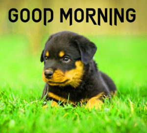 Puppy Lover Good morning Images photo pics hd