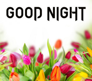 Flower Good Night Images photo pictures download