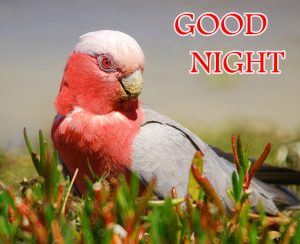 Good Night Wishes / Gud Night Images Wallpaper HD New