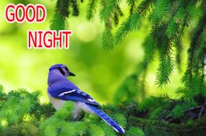 Good Night Wishes / Gud Night Images Photo for For Facebook