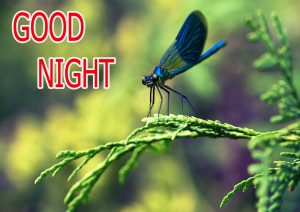 Good Night Wishes / Gud Night Images Photo Pics Download