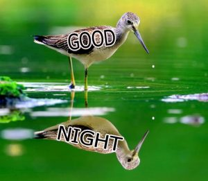 Good Night Wishes / Gud Night Images Wallpaper HD For Facebook