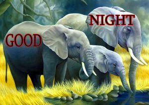Good Night Wishes / Gud Night Images Wallpaper Pic Download