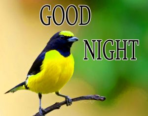 Good Night Wishes / Gud Night Images Wallpaper Pics for facebook