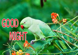 Good Night Wishes / Gud Night Images Photo for facebook