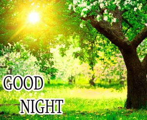 Good Night Wishes / Gud Night Images Pictures Free Download