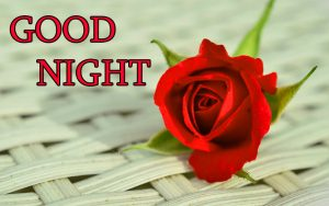 Good Night Wishes / Gud Night Images Wallpaper With Red Rose