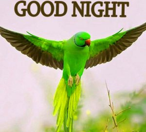 Good Night Wishes / Gud Night Images Wallpaper Pics for Whatsapp & Facebook