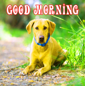 Puppy Lover Good morning Images photo pics free hd