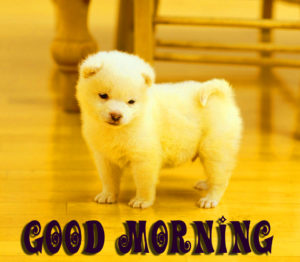 Puppy Lover Good morning Images wallpaper photo hd
