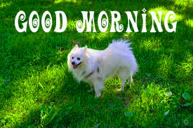 Puppy Lover Good morning Images pics photo free hd