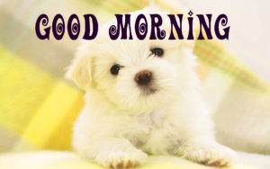 Puppy Lover Good morning Images photo wallpaper free download