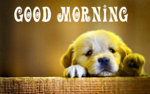 Puppy Lover Good morning Images pictures photo hd download