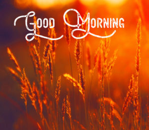 Good Morning Sunshine Images wallpaper photo hd download