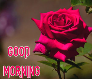 Good Morning Beautiful Images picture for best friend