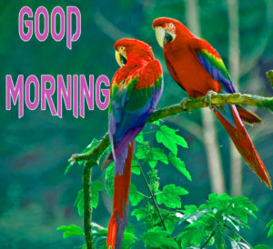 Good Morning Beautiful Images photo for Facebook