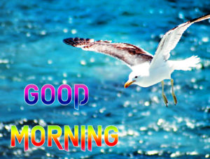 Good Morning Beautiful Images photo for friend