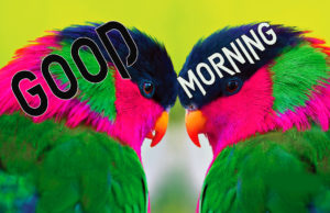 Good Morning Beautiful Images pics for whastapp