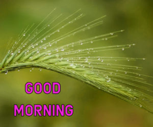 Top Good Morning Images photo Wallpaper Pics Download