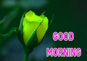 Top Good Morning Images wallpaper pics download