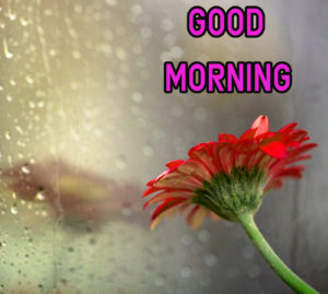 Top Good Morning Images wallpaper pics