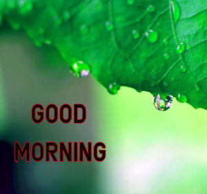 Top Good Morning Images photo hd