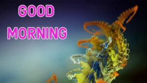 Top Good Morning Images wallpaper for whastapp