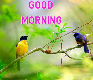 Top Good Morning Images wallpaper for friend