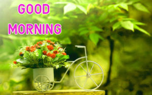 Top Good Morning Images photo downloads