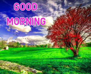 Top Good Morning Images wallpaper photo download