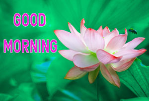 Top Good Morning Images photo picture