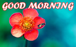 Good Morning Beautiful Images photo pics hd