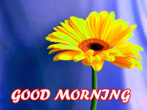 Good Morning Beautiful Images pictures photo hd download