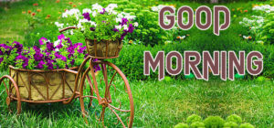 New Good Morning Images Wallpaper Pics Free Download