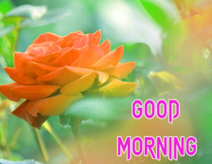 New Good Morning Images  picture download