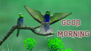 New Good Morning Images pics for free